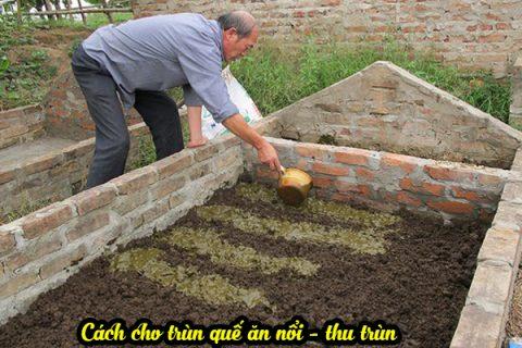 Cách cho trùn ăn khi nuôi để lấy phân trùn quế