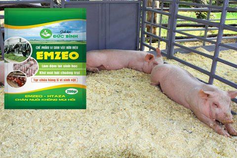 Cách làm đệm lót sinh học nuôi lợn (heo) chưa bao giờ dễ đến vậy