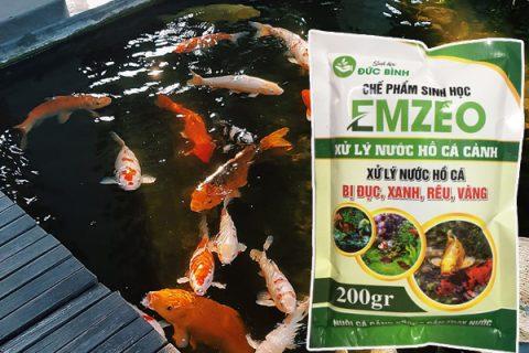 Cách làm nước hồ cá koi trong vắt hiệu quả nhất là sử dụng vi sinh cho hồ cá Emkoi và Emzeo cá cảnh