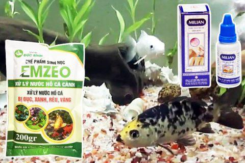Cách làm nước hồ cá trong vắt hiệu quả nhất là sử dụng thuốc làm trong nước hồ cá Emzeo cá cảnh
