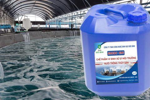 Cách sử dụng chế phẩm sinh học EM gốc ( EM1) trong nuôi tôm, cá, thủy sản hiệu quả nhất