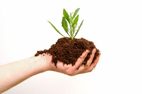 Cách sử dụng phân trùn quế hiệu quả
