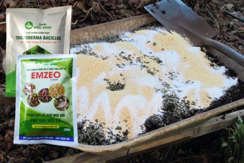 Cách ủ phân đậu tương dạng bột sử dụng nấm trichoderma và chế phẩm Emzeo