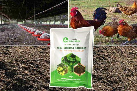 Cách ủ phân gà đạt hiệu quả nhanh nhất là sử dụng chế phẩm trichoderma để ủ