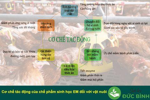 Chế phẩm sinh học EM gốc - Emgro có nhiều ứng dụng trong chăn nuôi