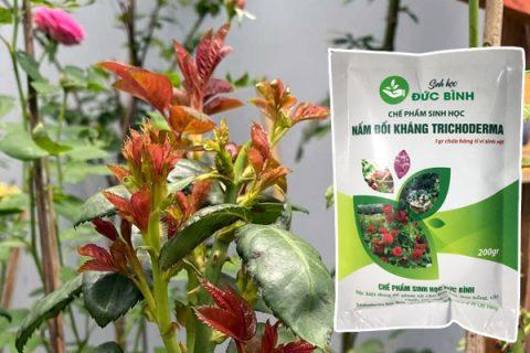Chế phẩm trichoderma cho hoa hồng, hoa lan và nhiều loại cây trồng