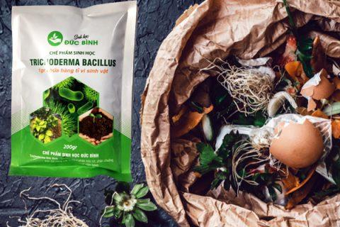 Chỉ lựa chọn rác hữu cơ để ủ phân từ rác nhà bếp
