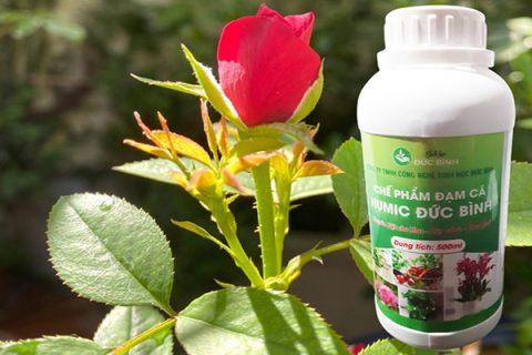 Đạm cá humic Đức bình sản xuất chuyên biệt dành cho hoa hồng