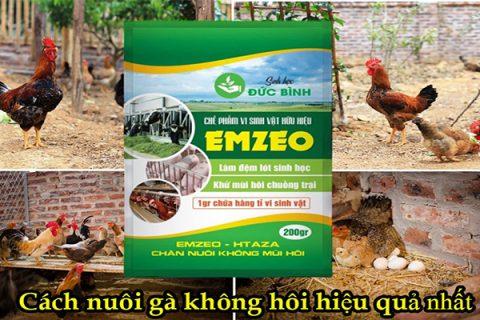 Giải pháp nuôi gà không mùi hôi