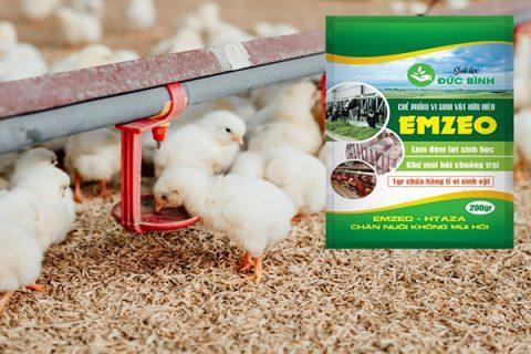 Giải pháp nuôi gà không mùi hôi hiệu quả nhất là sử dụng men khử mùi hôi chuồng gà Emzeo - Htaza