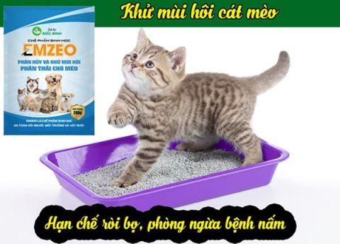 Khử mùi hôi phân thải của mèo rất hiệu quả khi sử dụng kèm cát vệ sinh