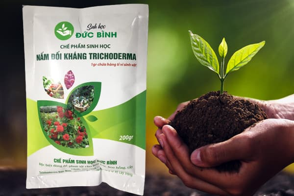 Nấm đối kháng trichoderma Đức Bình có tác dụng rõ rệt đối với cây trồng