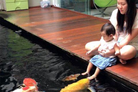 Nước hồ cá cảnh bị đục, bốc mùi do đâu