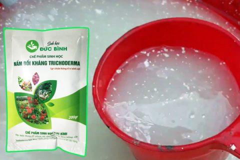 Pha dịch đậu tương với nước sạch và nấm trichoderma tưới cây là cách sử dụng hiệu quả nhất