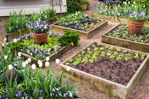 Phân cá là một sản phẩm tuyệt vời để thúc đẩy tăng trưởng cây trồng và làm xanh vườn rau nhà bạn.