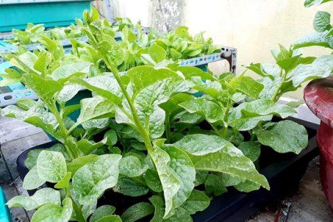 Phân đậu tương có thể sử dụng cho tất cả các loại cây trồng