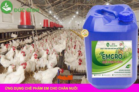 Sử dụng chế phẩm EMgro trong chăn nuôi lợn gà rất hiệu quả