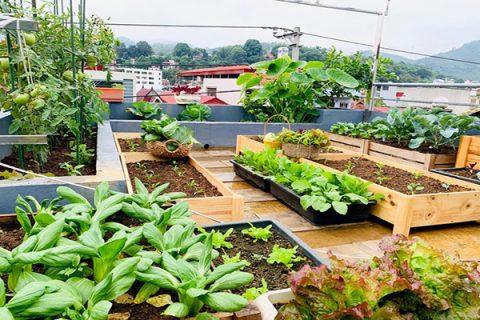 Sử dụng phân ủ từ rác nhà bếp giúp cây trồng phát triển và làm đất màu mỡ