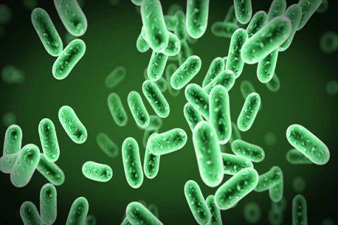Thuốc trừ sâu vi sinh Bacillus thuringiensis là loại phổ biến nhất hiện nay