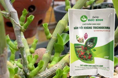 Trichoderma giúp cây sinh trưởng khỏe mạnh