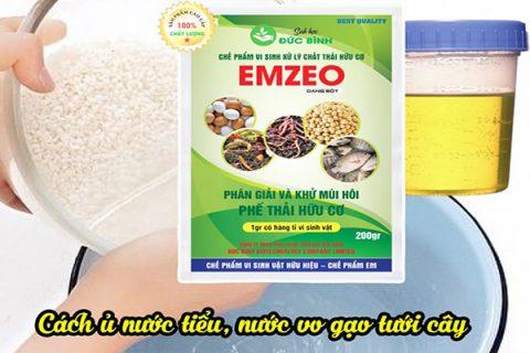 Ủ nước vo gạo tưới lan là cách sử dụng hiệu quả nhất