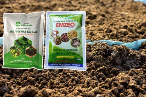 Các bước thực hiện ủ hoai mục phân bò tươi bằng chế phẩm Emzeo và nấm trichoderma đơn giản và không hề phức tạp