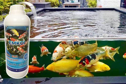 Cách tạo vi sinh cho hồ cá koi hiệu quả nhất hiện nay là sử dụng EMKOI hoặc Emzeo cá cảnh