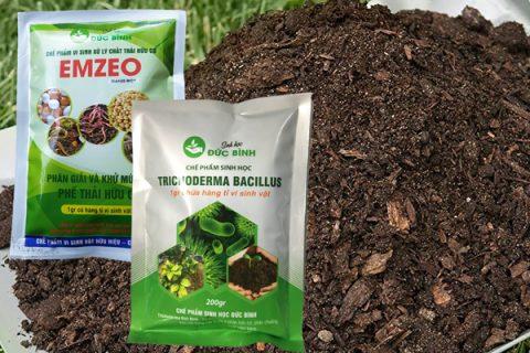 Cách ủ phân bò tươi thành phân bón hiệu quả nhất là sử dụng nấm trichoderma bacillus và chế phẩm sinh học emzeo