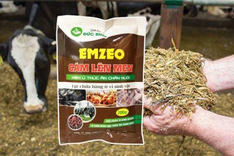 Cách ủ rơm cho bò sử dụng men ủ thức ăn chăn nuôi là giải pháp tốt nhất hiện nay