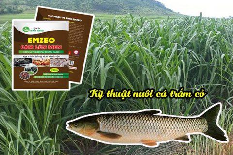 Cỏ voi và phụ phẩm nông nghiệp được sử dụng làm thức ăn nuôi cá trắm cỏ