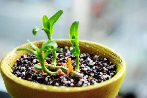 Giá thể trồng lan tốt nhất hiện nay là gì?