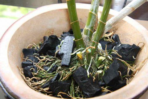 Giá thể trồng lan từ than củi