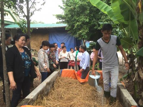 Kỹ thuật ủ rơm cho bò với U-rê