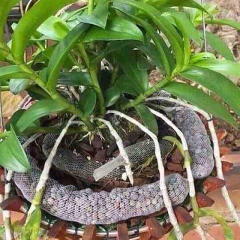 N thiếu hụt sẽ dẫn tới cây phát triển không đồng đều, thân còi cọc, lá cây vàng úa và mần khó nhú.