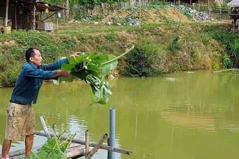 Nếu cho cá ăn thức ăn là cá loại cỏ lá thì bạn cần cung cấp khoảng 25 đến 30% chế phẩm sinh học trên tổng khối lượng cá trong ao.