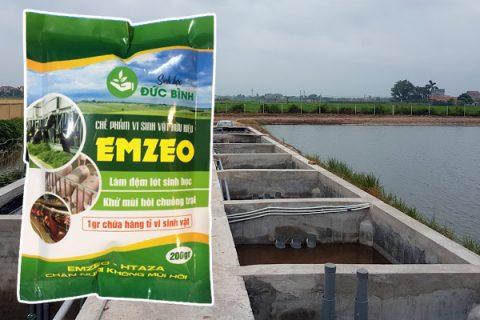 Sử dụng Emzeo chuồng trại là cách xử lý nước thải và mùi hôi chuồng trại nuôi heo hiệu quả nhất hiện nay