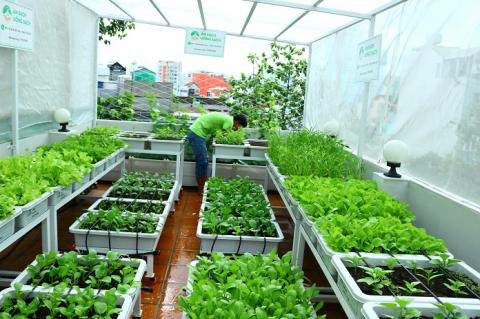 Sử dụng chậu trồng rau chuyên dụng