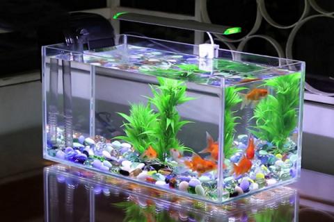 Sử dụng nước máy nuôi cá cảnh được không?