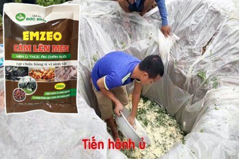 Thực hiện ủ thức ăn cho heo