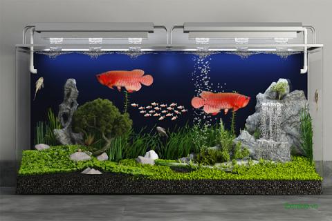 Vai trò của vi sinh đối với hồ nuôi cá cảnh